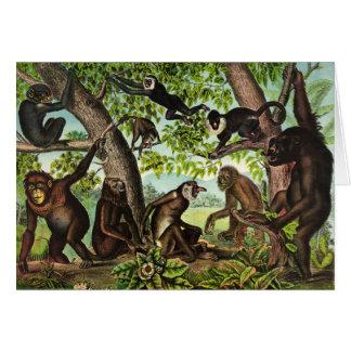 Vintage Illustration - Monkey Jungle, Card
