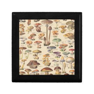 Vintage illustration of mushrooms gift box