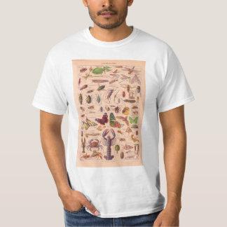 Vintage image, arthropods shirts