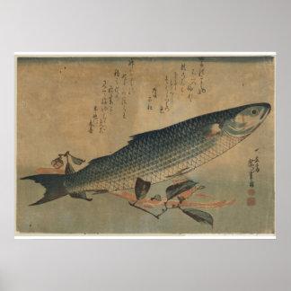 Vintage Image of Japanese Striped Mullet - Canvas Print