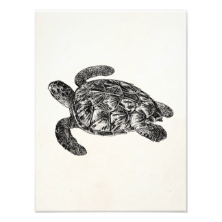 Vintage Imbricated Sea Turtle - Turtles Template Photo Print