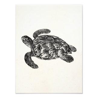 Vintage Imbricated Sea Turtle - Turtles Template Photographic Print