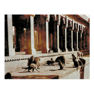 Vintage India, Monkey temple Postcard