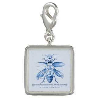 Vintage Insect Image | Beetles | Blue Charms