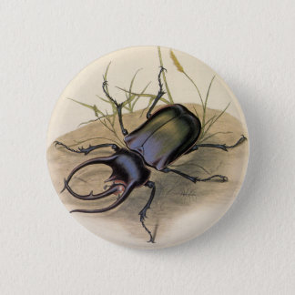 Vintage Insects and Bugs, Rhino Rhinoceros Beetle 2 Inch Round Button