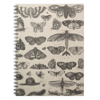 Vintage Insects Entomology Lepidoptera Field Notes Notebooks