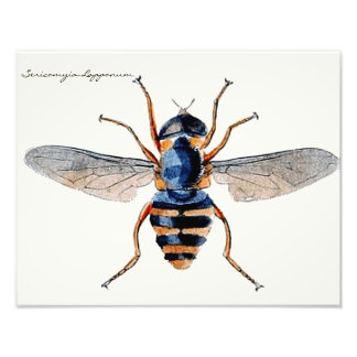 Vintage Insects Scientific Entomology Fly Photo Art