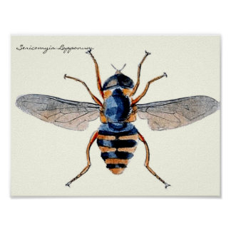 Vintage Insects Scientific Entomology Fly Poster