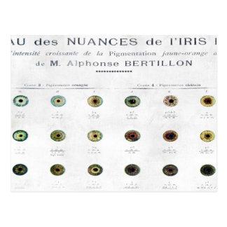 Vintage Iris Color Chart Postcard