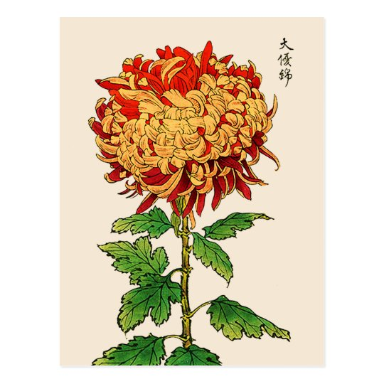 Vintage Japanese Chrysanthemum. Gold and Orange Postcard