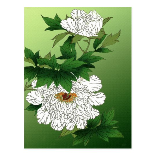 Vintage Japanese Sketch of Large White Peony Postcard
