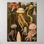 Vintage Jellyfish Antique Jelly Fish Illustration Poster
