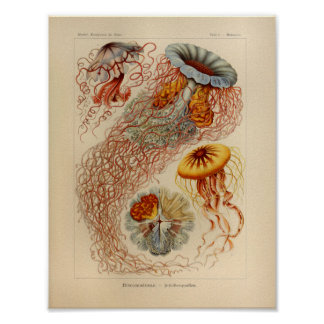 Vintage Jellyfish Color Ernst Haeckel Print