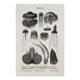 Vintage Jellyfish Species Retro Sea Jelly Fish Poster
