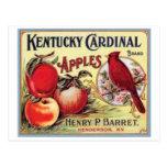 Vintage Kentucky Cardinal Apples, Henry P Barret, Postcard