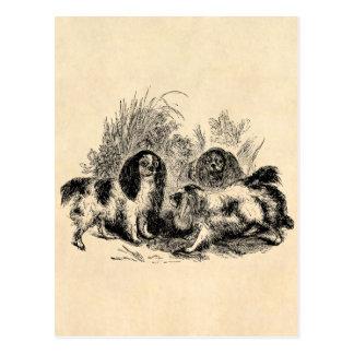 Vintage King Charles Spaniel Dog 1800s Spaniels Postcard