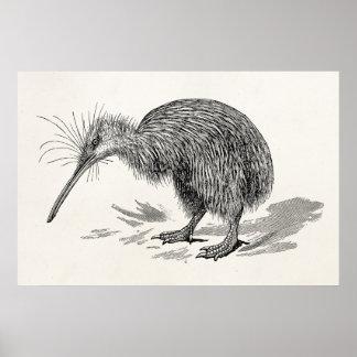 Vintage Kiwi Bird Antique Birds Template Poster