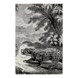 Vintage Leopard 1800s Leopards Big Game Cats Poster