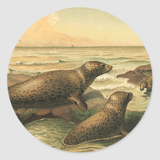 Vintage Leopard Seals by the Ocean, Wild Animals