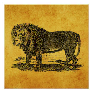 Vintage Lion Illustration - 1800's African Animal Poster