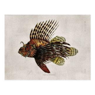 Vintage Lionfish Postcard