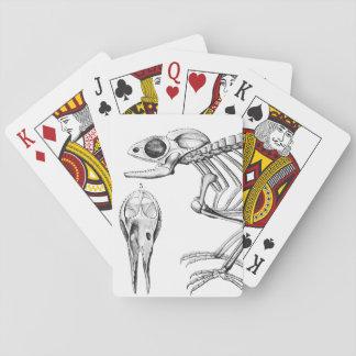 Vintage lizard skeleton playing cards