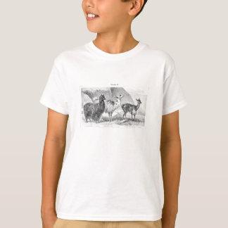 Vintage Llama Alpaca Template Llamas Alpacas T-Shirt