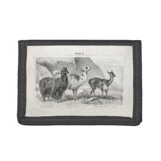 Vintage Llama Alpaca Template Llamas Alpacas Tri-fold Wallet