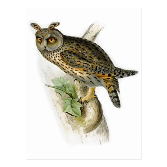 Vintage long eared owl asio otus postcard