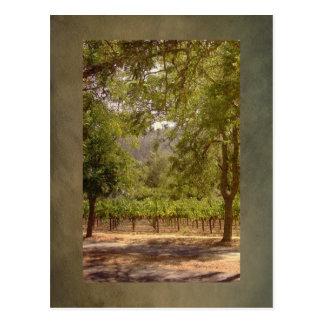 Vintage Look California Vineyard Landscape Postcard