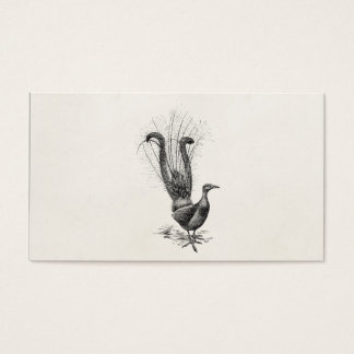 Vintage Lyre Bird Lyrebird Illustration Template Business Card