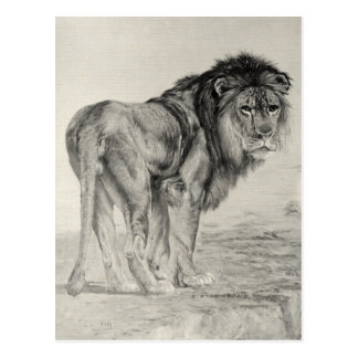 Vintage Majestic Lion Postcard