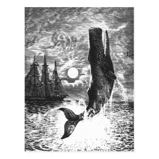 Vintage Marine Life Mammal, Sperm Whale Breaching Postcard