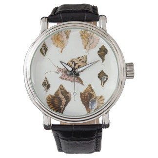 Vintage Marine Life Organisms, Snails and Mollusks Watch