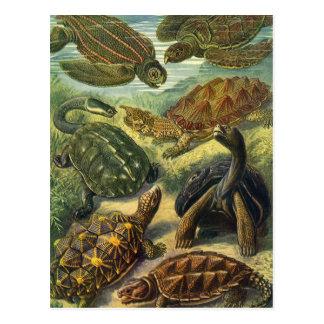 Vintage Marine Reptiles Sea Turtles Land Tortoise Postcards