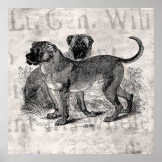 Vintage Mastiff Dog 1800s Mastiffs Dogs Templates Poster