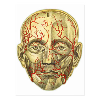 Vintage Medical Illustration of Head and Vascular Postcard