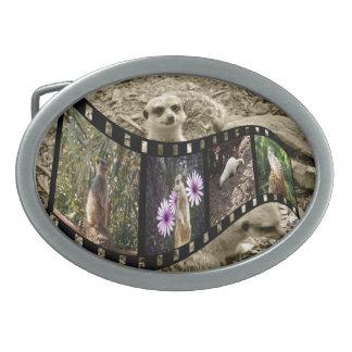 Vintage Meerkat Photo Strip, Oval Belt Buckles