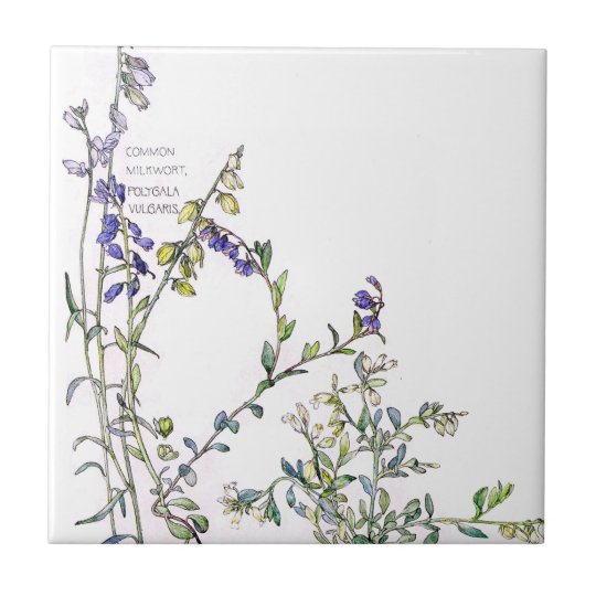 Vintage Milkwort Wildflower Flowers Tile