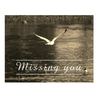 vintage missing you postcard- seagull/nature postcard
