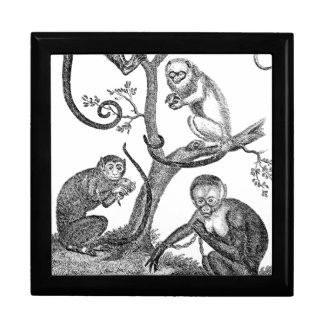 Vintage Monkey Illustration - 1800's Monkeys Gift Box
