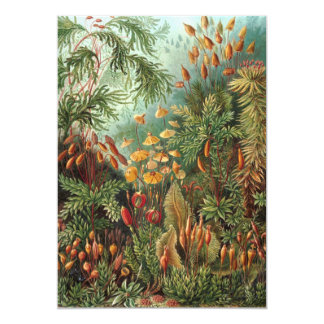 Vintage Moss Plants by Ernst Haeckel Invitations