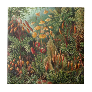 Vintage Moss Plants by Ernst Haeckel, Muscinae Ceramic Tile