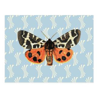 Vintage Moth Illustration Pop Art Postcard