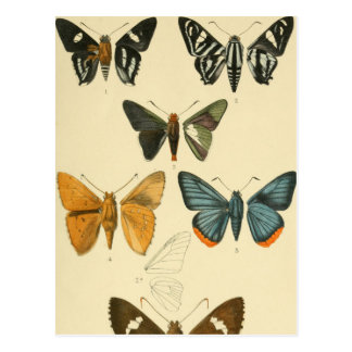 Vintage Moth Illustrations Postcard