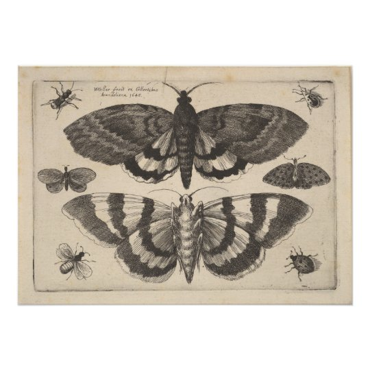 Vintage Moth Lepidoptera Art Print (64)