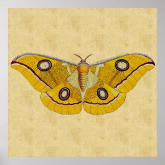 Vintage Moth Poster