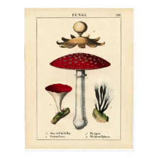 Vintage Mushroom Botanical Print Postcard