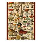 Vintage Mushroom Guide Postcard