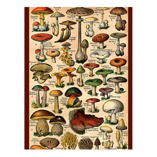 Vintage Mushroom Guide Postcard Zazzle Ca